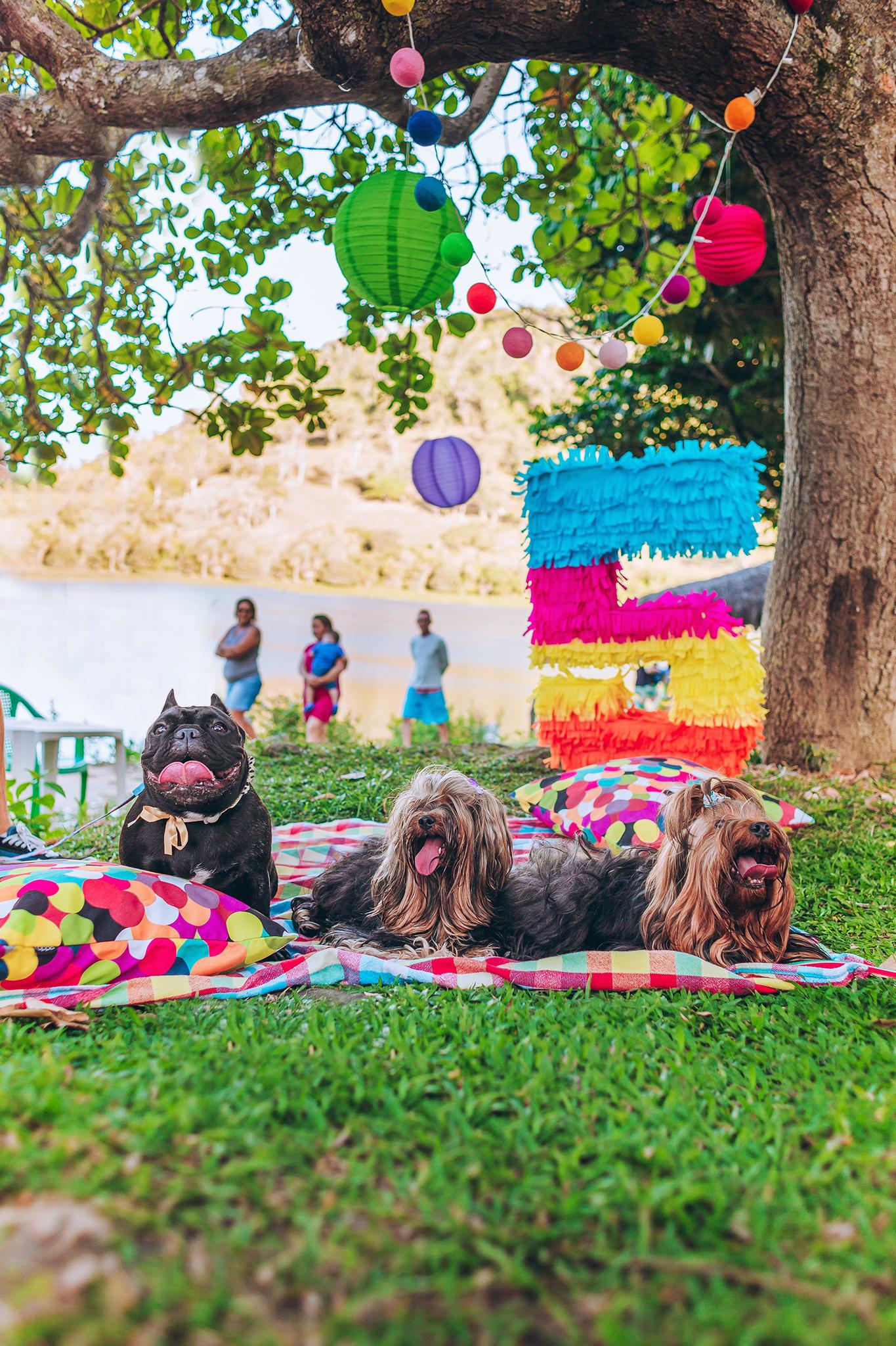 pet party festa